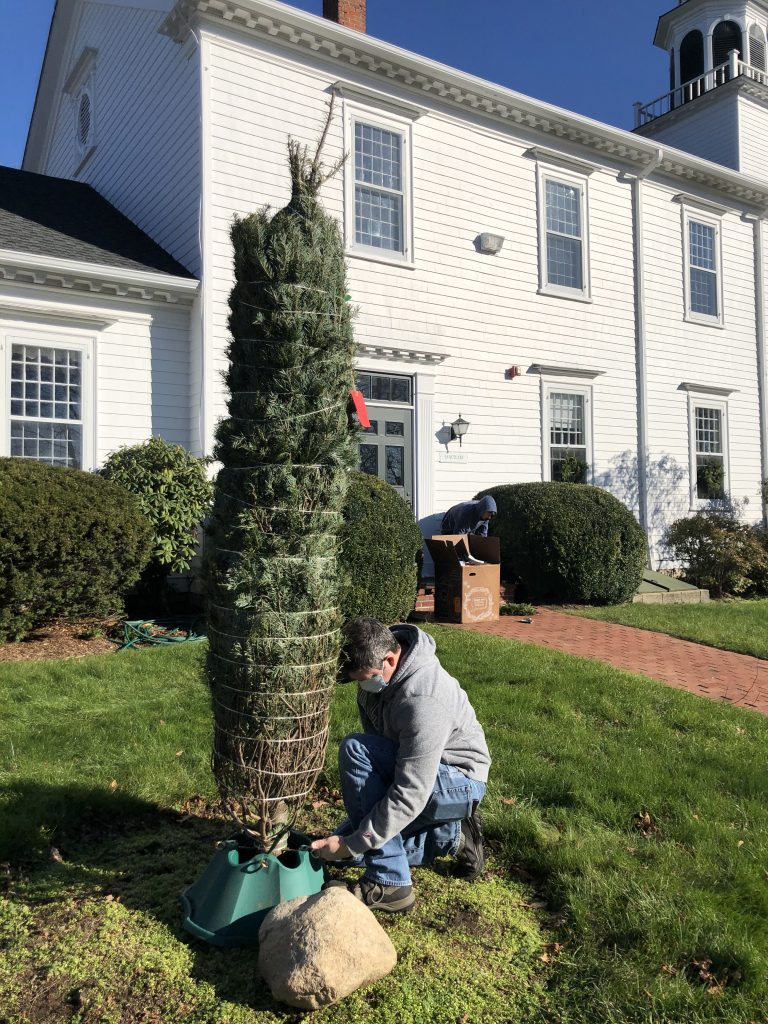 planting new evergreen outside church