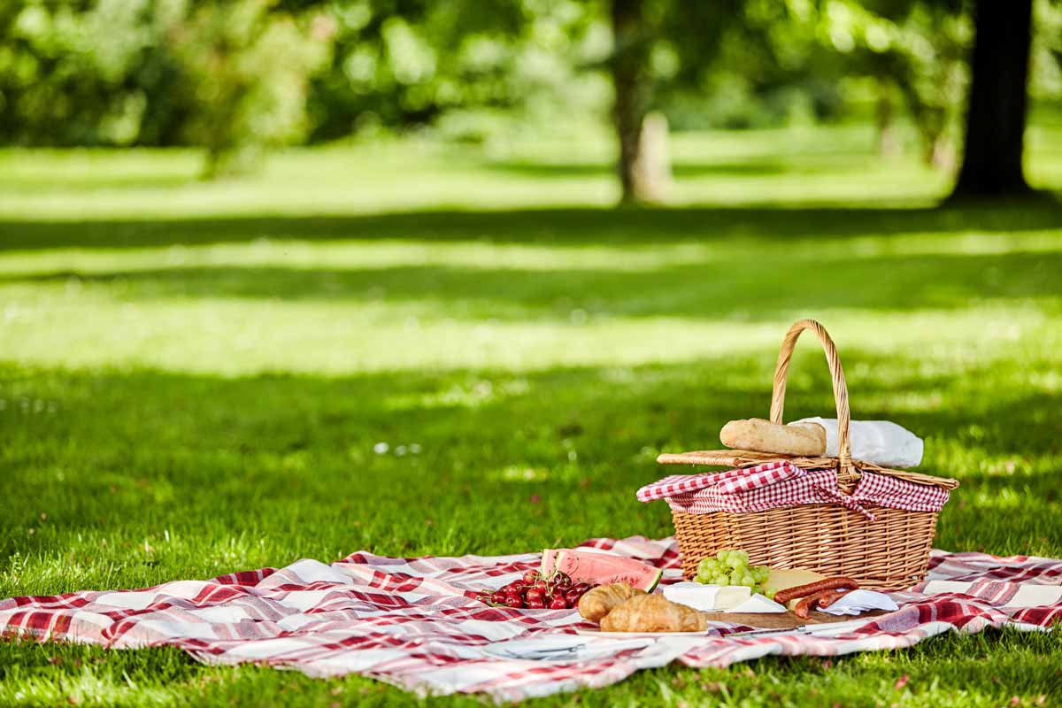 picnic on lawn